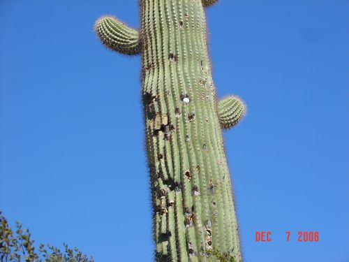 Scottsdale 29.JPG